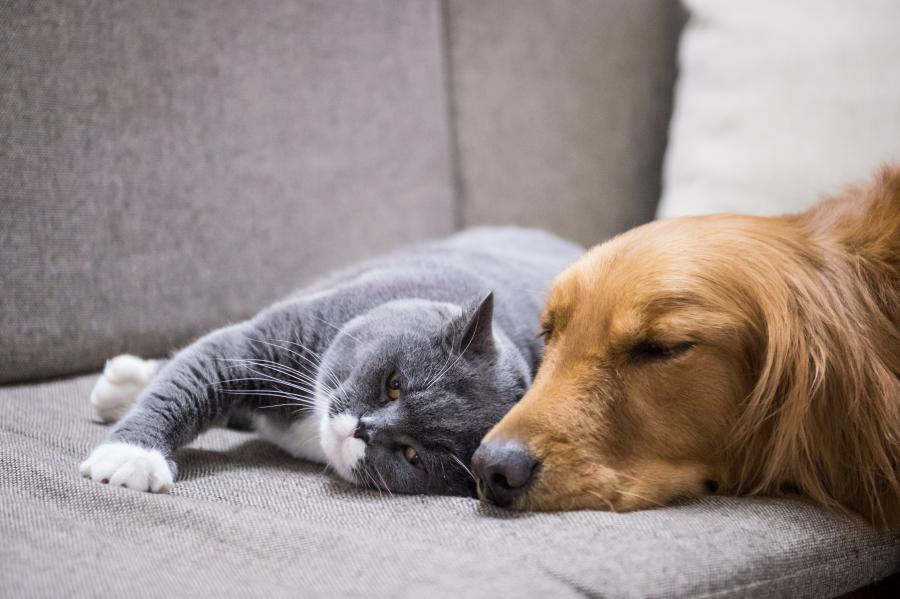 cat and dog napping on couch