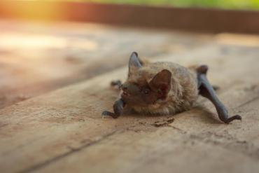 Bat on the ground