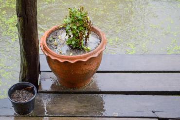 Plant pots on a rainy day